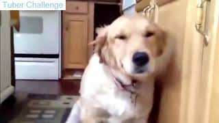 Cute Dogs Acting Guilty - Funny Guilty Dogs Compilation 2019 - Dogs 2019 - Tuber Challenge
