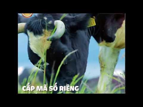 Quy trình sản xuất sữa hoàng gia Royal Ausnz