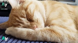 Cats Love to Relax - Cute Sleeping Cats Compilation 2019