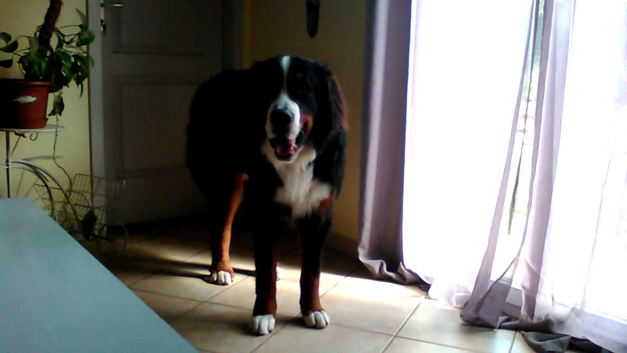 Je vous presente le chien le plus debile du monde
