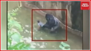 Gorilla Shot Dead to Save Kid