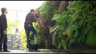 video de Historias de Luz: Terapia Urbana ajardina paredes para combatir síndrome edificio enfermo.