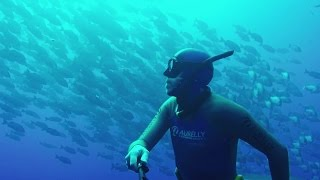 Wonderful Freediving in Raz Mohammed Nationalpark