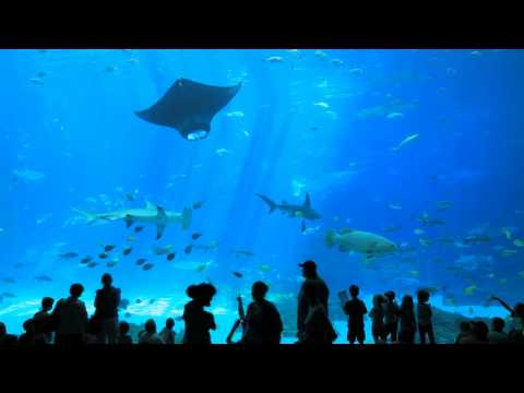 The World's Largest Aquarium // Georgia Aquarium // Atlanta GA