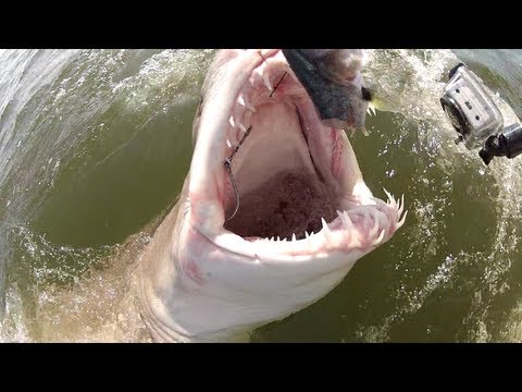 SHARK FISHING - Hooking Up With A Monster Delaware Bay Shark!!!