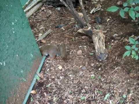 東山動物園のエゾリス