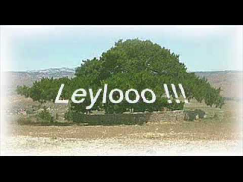 İsmail İPEK - LEYLO