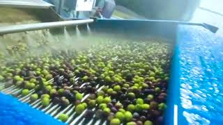 How to produce olive oil?