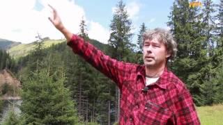 Karpaten - den letzten Uhrwald Europas bewahren