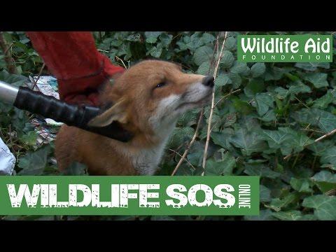 Wildlife SOS Online - Special Episode