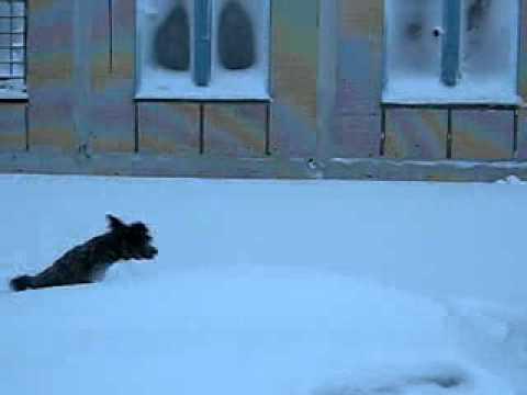 Откапывает машину из снега