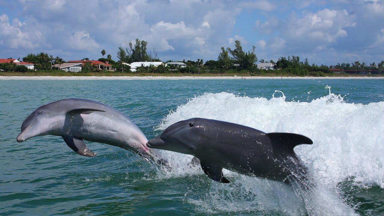 Images Of Sanibel Island Florida