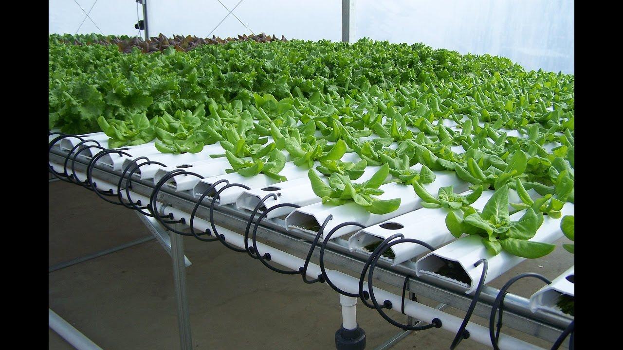 Оборудование гидропоника для выращивания зелени 52