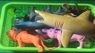 Learn Colors with Sea Animals and Wild Animals - Insect | Shark Toys For Kids