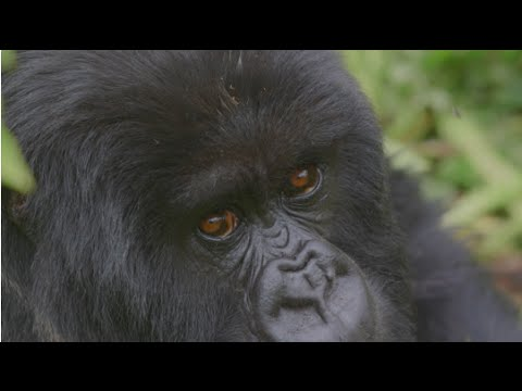 TPGtv Season 1, Episode 5: Traveling to Rwanda and Trekking with Gorillas