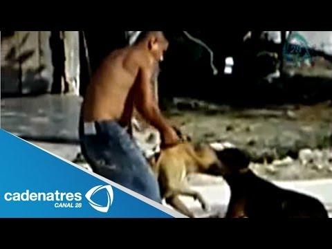 Peleas de perros un negocio redituable para el crimen organizado
