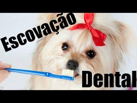 Escovando os dentes do seu cãozinho/cachorrinho/animal/pet! Como Escovar Os Dentes Lói Cúrcio