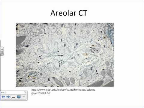 Histology Connective Tissues of the Body.wmv