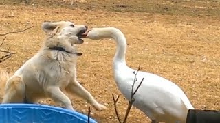 Funny ANIMALS & FAILS that will PUT A BIG SMILE ON YOUR FACE!