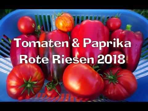 Tomaten & Paprika - Rote Riesen 2018 (+ Erdbeer-Ampeln), Film 67
