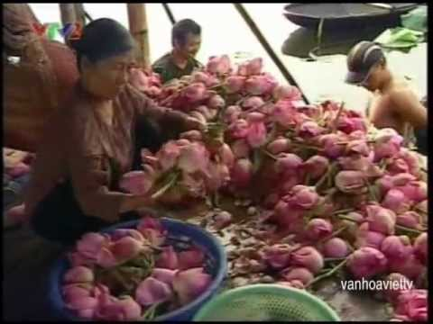 Hoa Sen trong tâm thức Việt
