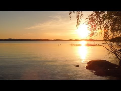 Whooper swans singing Lake Saimaa