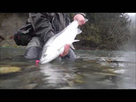Steelhead Fishing 2014