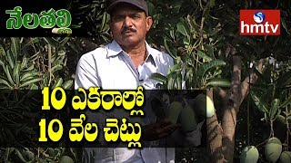Farmer Hari Babu High Density Farming | Natural Farming hmtv