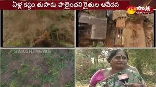 Titli Cyclone Effect in Srikakulam | Gudem People Face to Face | Sakshi Ground Report