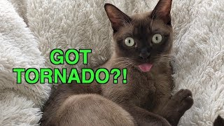 Tornado Siren?! Cat Reacts to Emergency Warning Alert System! Cute & Funny! Cat Blep!