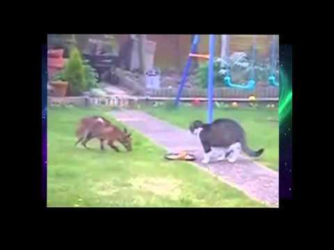 Бесстрашные коты,коты-спасатели!Кошка спасает ребенка,кот прогнал крокодила!