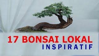 17 BONSAI LOKAL INSPIRATIF