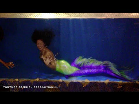 Mermaid Tank With Live Mermaids Swimming in Aquarium