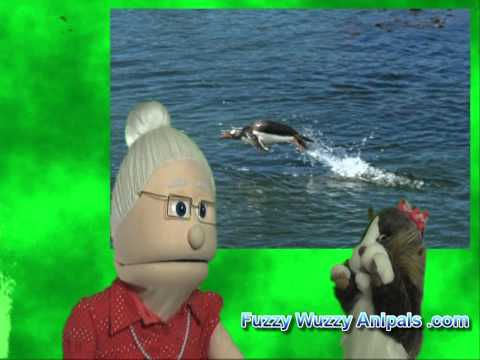 Emperor Penguins Facts with the Anipal Info Puppets