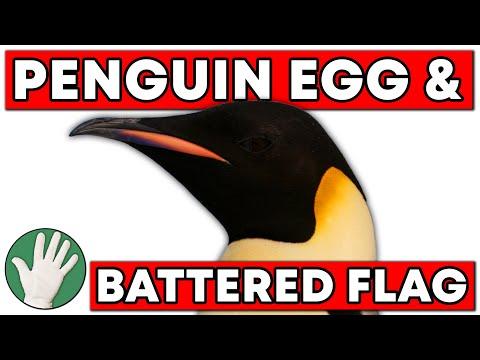 Penguin Egg & Battered Flag  - Objectivity #20