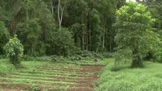 São Tomé - Before It's Gone