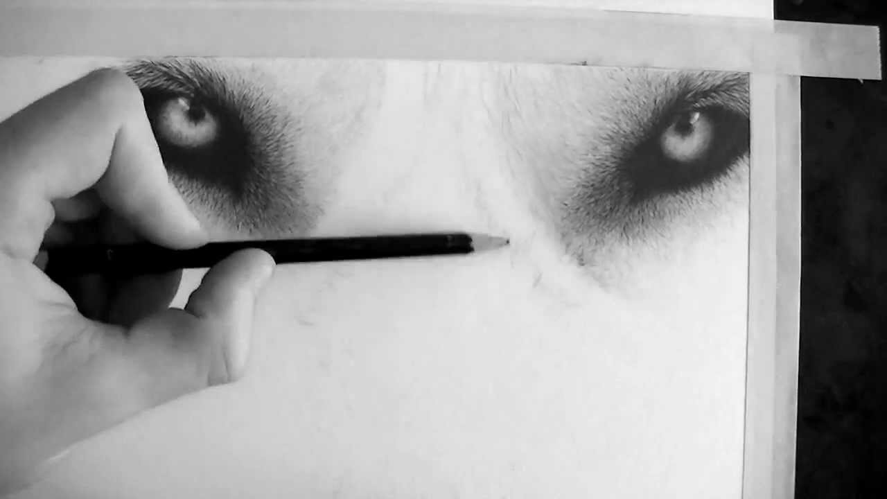how to draw a realistic wolf eye