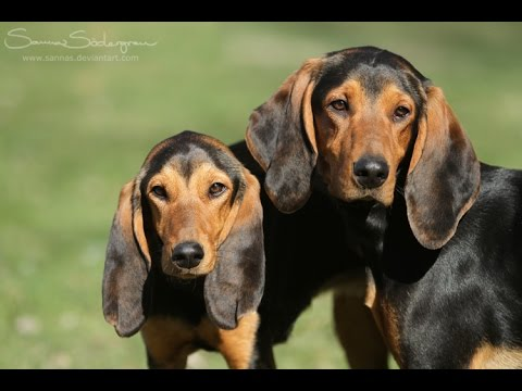 HOUND DOGの画像 p1_35