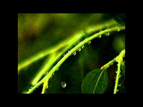 Slow Motion drop of Water from plant