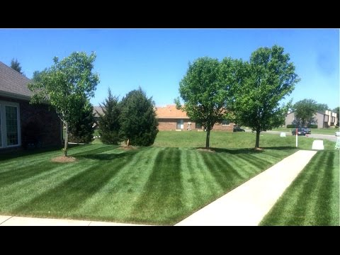 Lawn Care Like A Boss #6 Snakes, Pressure Washer, Lawn Striping