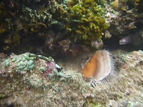 Sri Lanka,ශ්රී ලංකා,Ceylon,Coral Reef (04)