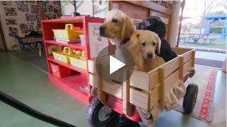 For Every View Of This Video A Pound Of Dog Food Will Be Donated To Shelters YES!