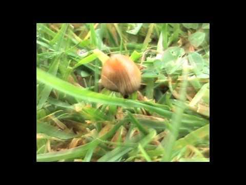 Cornish Magic Mushrooms