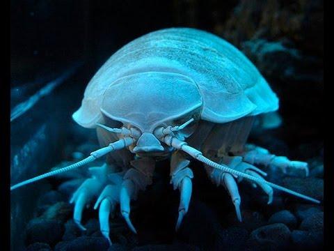 10 Amazing Underwater Discoveries - Alltime10s