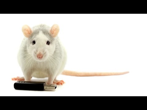 What is Sleep? - How Scientists Know Rats Make Memories