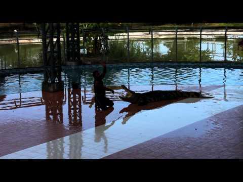 crocodile's show – Nakhonsawan Thailand