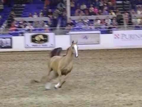 Scottsdale Arabian Horse Show Liberty Freestyle 2013