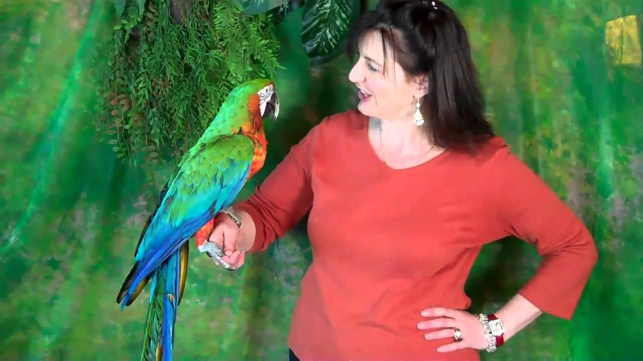 Parrots as Pets For Sale Pet Shop Parrot Antics