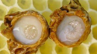 Sữa ong chúa là gì?