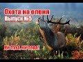 Охота на оленя, выпуск №5 (RUS)